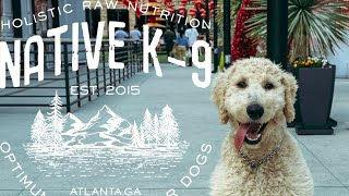 Goldendoodle Puppy Training at Atlantic Station