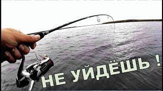 Клёв рыбы в ветер. Влияние ветра на клёв. Щука. Окунь. Судак