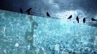 Giọt mưa bên đường