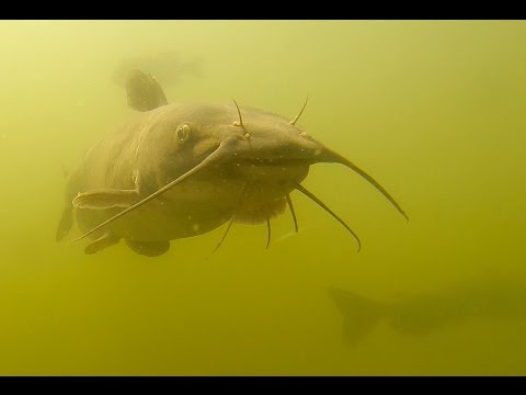 Thumbnail image for 'Why buy a fishing license?  Watch this video.'
