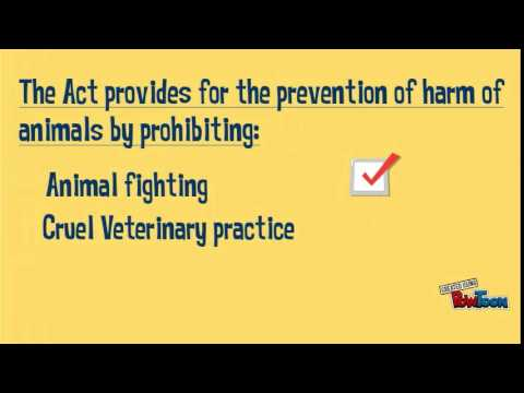 Know Their Rights: The Law on Animal Welfare