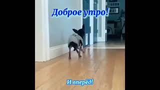 смешное видео #happyvideos