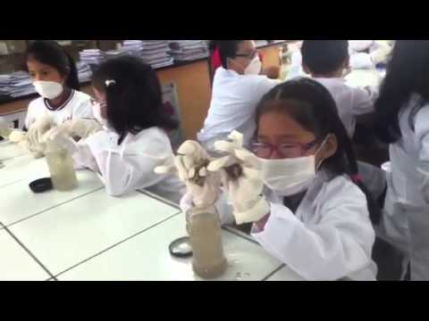 Práctica de laboratorio hueso y vinagre - YouTube