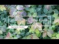 30 Seconds with Double Play® Blue Kazoo® Spirea