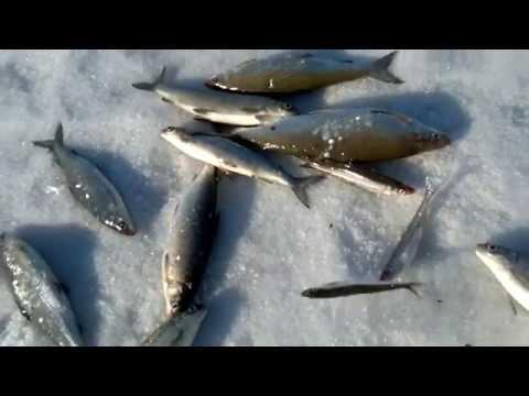 большая имандра рыбалка