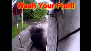 Diesel Rolling Coal on PEOPLE 2015 Compilation, COAL CAM