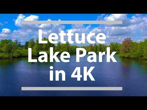 Lettuce Lake Park in 4K -  Tampa, FL