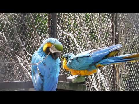 Гвинейский турако и попугаи 01.07.2019