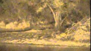 Night Sounds from Djuma Waterhole