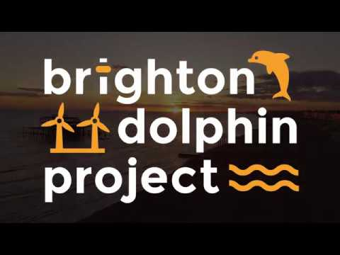 We are the Brighton Dolphin Project