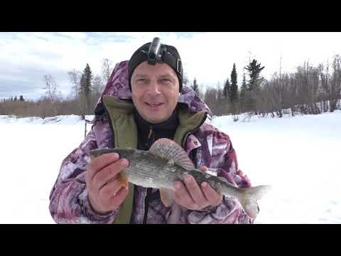 И все таки трофейный ХАРИУС был пойман / Весенняя рыбалка на крайнем севере