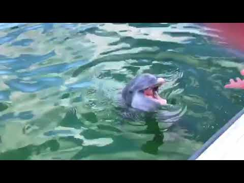 Dolphin came to visit me St Andrews bay PCB 7/13/2018