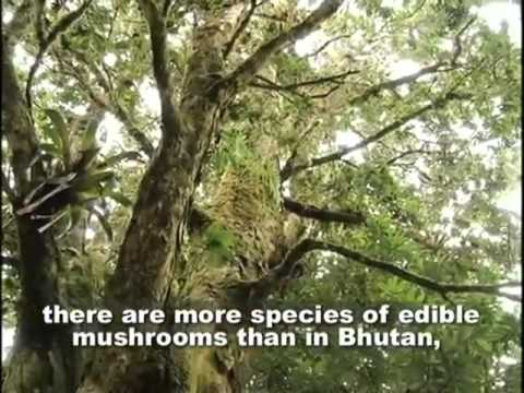 Bhutan Experts teach Costa Ricans how to grow edible mushrooms