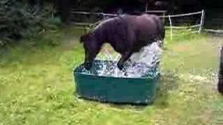 mon cheval lave ma voiture!