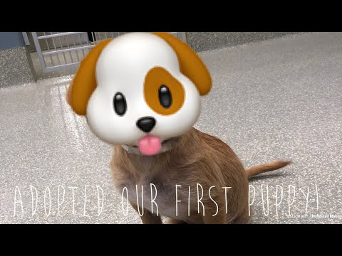 First Time Adopting A Puppy From Houston SPCA