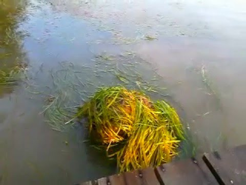 Русалка под водой живая
