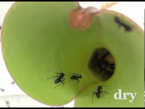 how to get ants out of a plant