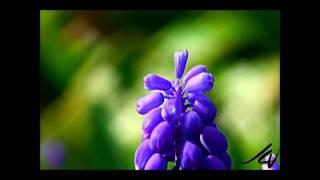 Sajni - Jal Boondh (Slow Version)