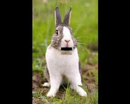 Angry rabbit - YouTube