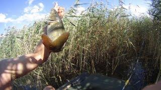 видео Лучшая рыбалка на Ахтубе на базе отдыха