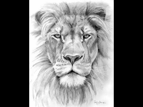 how to draw a lion - youtube