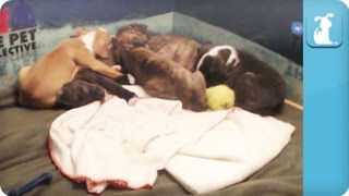 8 Hours of Puppies in 2 Minutes