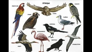 Названия птиц. Птицы. Learn birds' names in Russian language