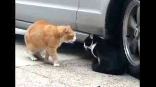 ネコのカワイイ面白動画を集めましたw ドジでマヌケだけどニャンコがか...