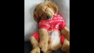 Funny Animals 🐶 Cats Dogs and More!! 😻 😁