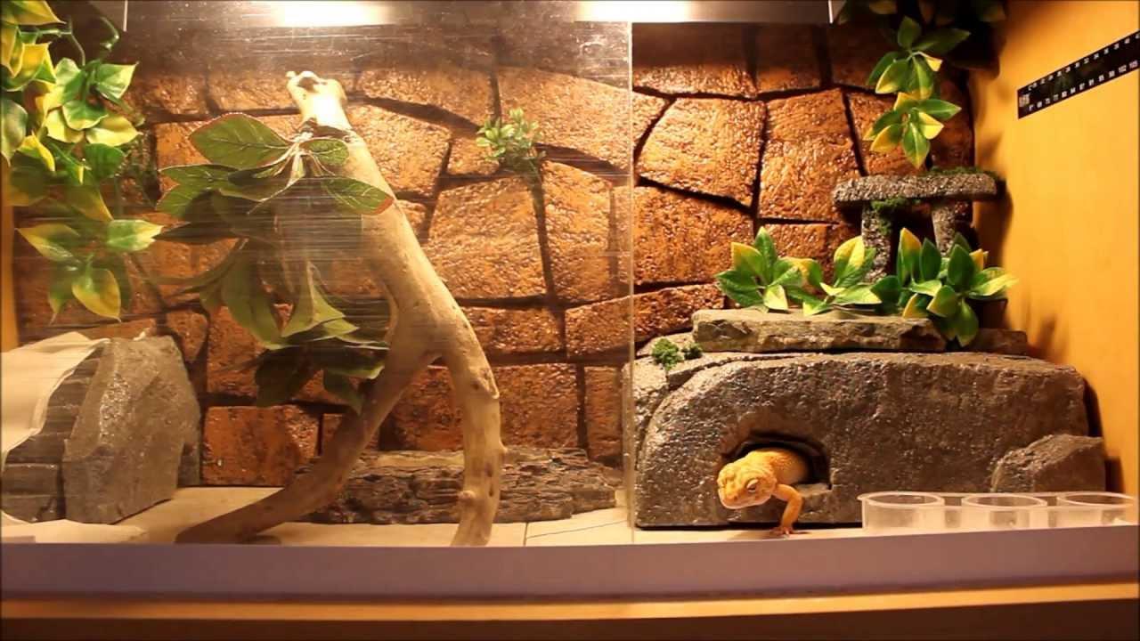 Wrv Leopard Gecko Tank Tour Youtube