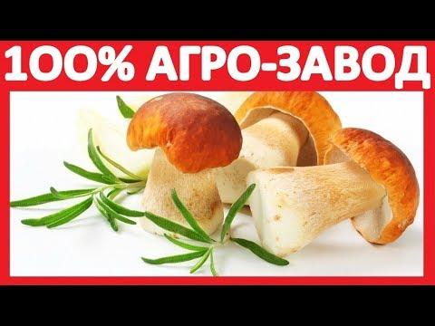 Кедровый орех — продажа в украине оптом компания джамбо, город киев: прямые поставки, цены.