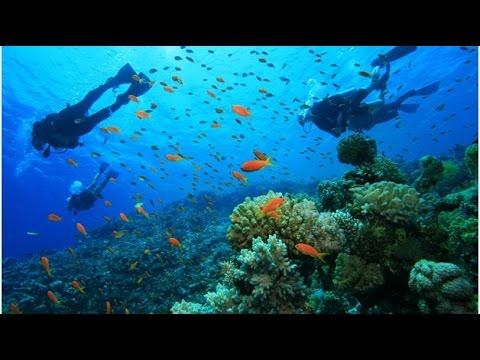 Under Water World ,Musandam , Khasab - Oman Travel Guide -مسندم خصب عمان