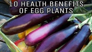 10 HEALTH BENEFITS OF EGG PLANT