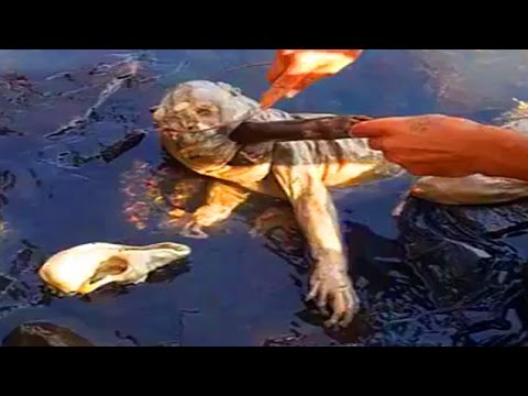 Is This A Chupacabra ? Mysterious Corpse Washes Up In Paraguay
