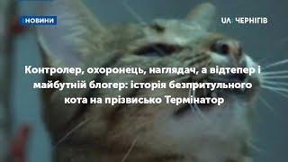 Історія безпритульного кота Термінатора з Чернігова