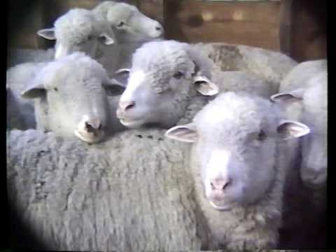 06 Raw Footage and going to Sheep Shearing 1996