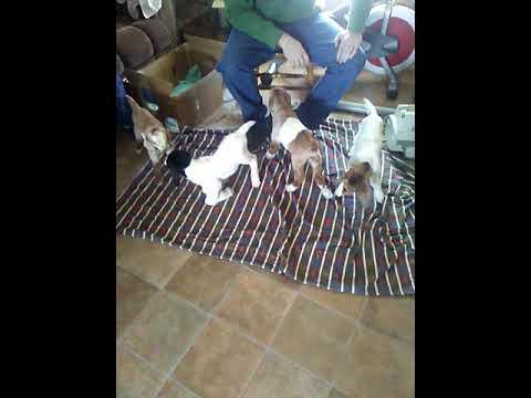3 week late baby goat training