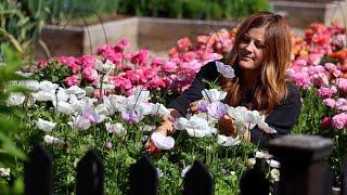 How I Grow Ranunculus & Anemones + Planting Sunflower & Zinnia Seeds! 🌸🌼💚 // Garden Answer