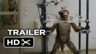 A Pigeon Sat on a Branch Reflecting on Existence Official US Release Trailer 1 (2015) - Movie HD