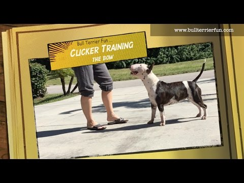 Clicker Training with Bull Terrier Mila - The Bow