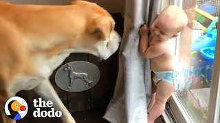 Watch This Little Boy Grow Up With A 180Pound Best Friend | The Dodo Soulmates | The Dodo Soulmates