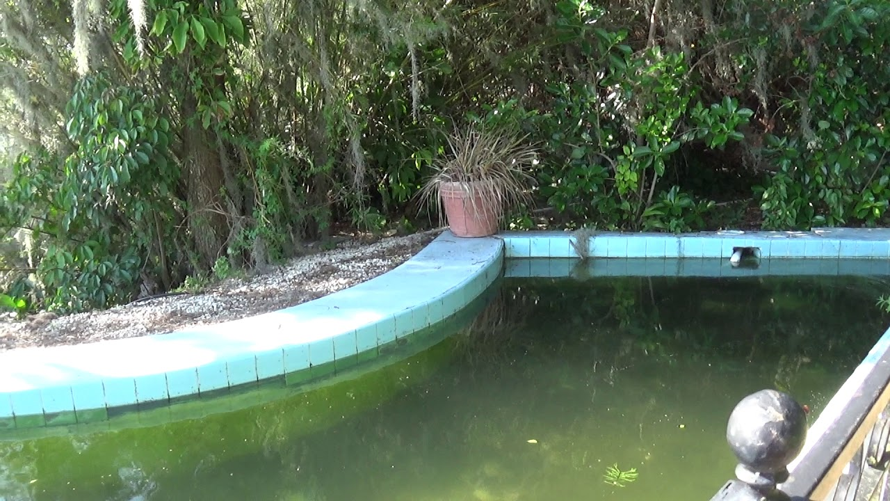 Historic Florida Shaped Esther Williams Swimming Pool Filming Location  Cypress Gardens Legoland FL