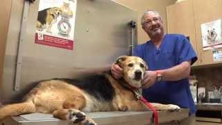 Take Paws: Aging Pet Care with David Scott Bieber, DVM, P.A.