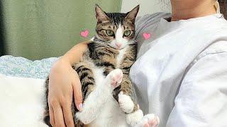 Comportamiento del gato que considera que su dueño es su madre gata