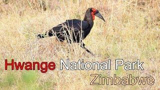 Hwange National Park in Zimbabwe