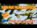 Suara Pikat Burung Paling Ampuh  Andalan Memikat Pikat Burung Bulu Bird Channel  Mp3 - Mp4 Download