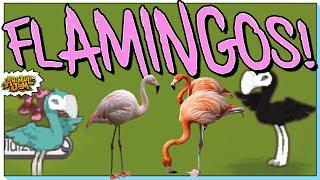 Flamingo is the next animal on Animal Jam!?! No Way!