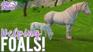 Foaling Season   Star Stable Update   Star Stable Online