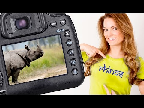 Indian Rhino Safari in Kaziranga National Park