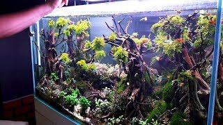 LÃO LÀNG 10 năm chơi hồ thủy sinh CHIA SẺ BÍ QUYẾT   Master set aquarium in Vietnam